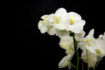 orchid plant delivery miami