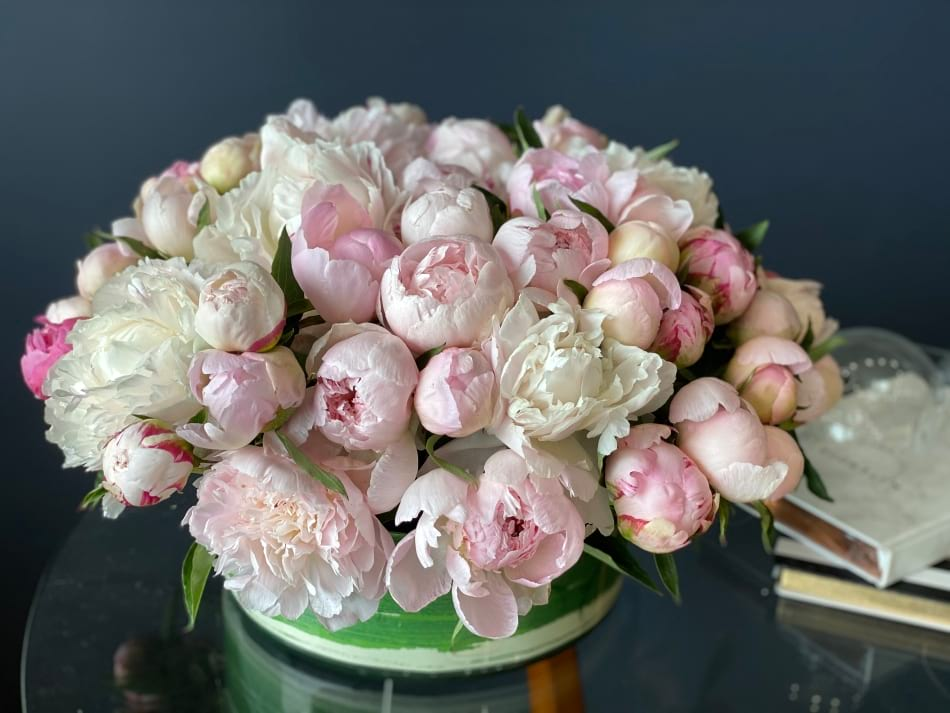 50 Peonies in low modern vase