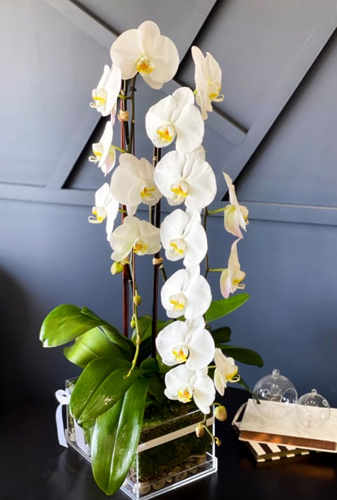 Orchids Plants Design in acrylic box