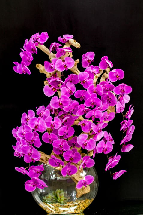 Luxurious Orchids Design
