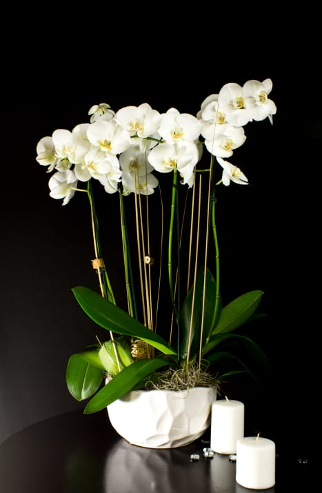 Orchids Plants Design in Ceramic Pot