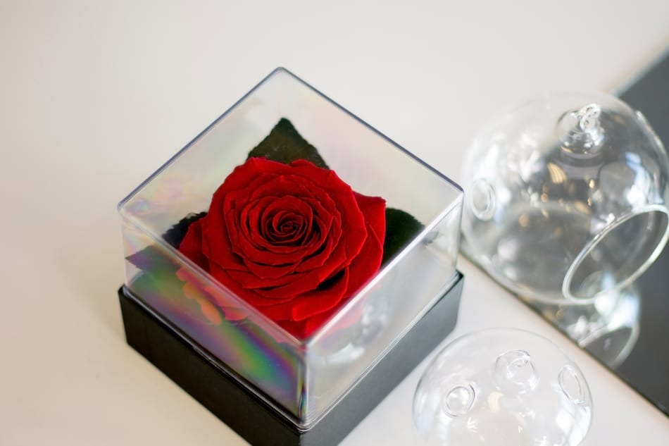 Everlasting Rose in the box