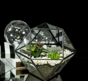Succulents Terrarium Large