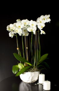 Large Orchids Arrangement In White Ceramic Vase
